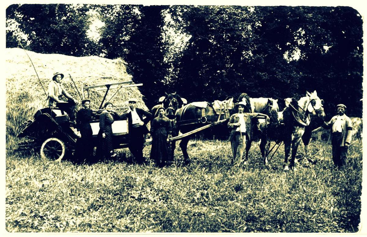 Scene de moisson 1920